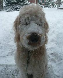 sally-erics-madysin-snowface-273x339.jpg