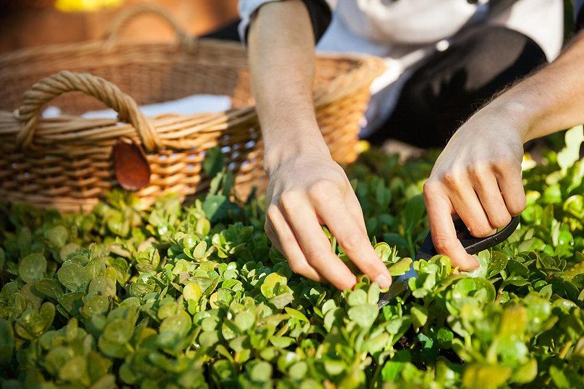 produits regioaux, frais, herbes, fuits, atelies