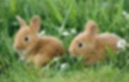 baby-bunnies-1518727618.jpg