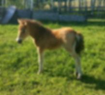OMG Miniature Foal
