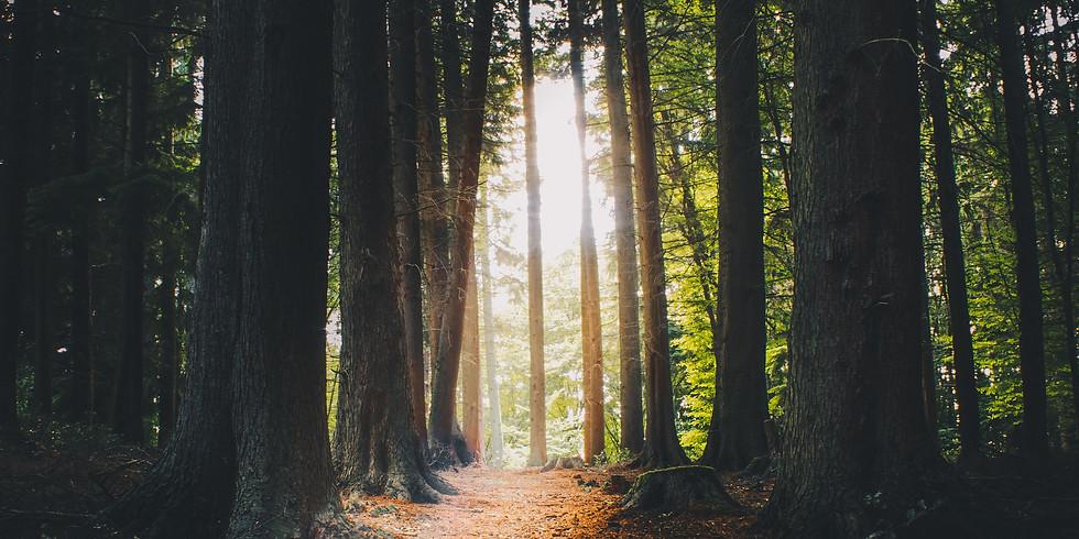 Summer Solstice Yoga & Mountain Bike Retreat in the Surrey Hills