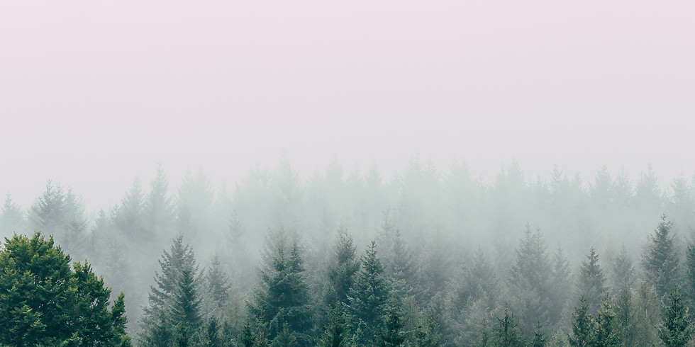 Wild Forest Yoga and Conifer Talk