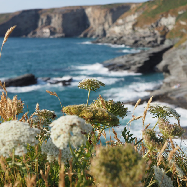 Cornwall coast (c). Lisa Chapman