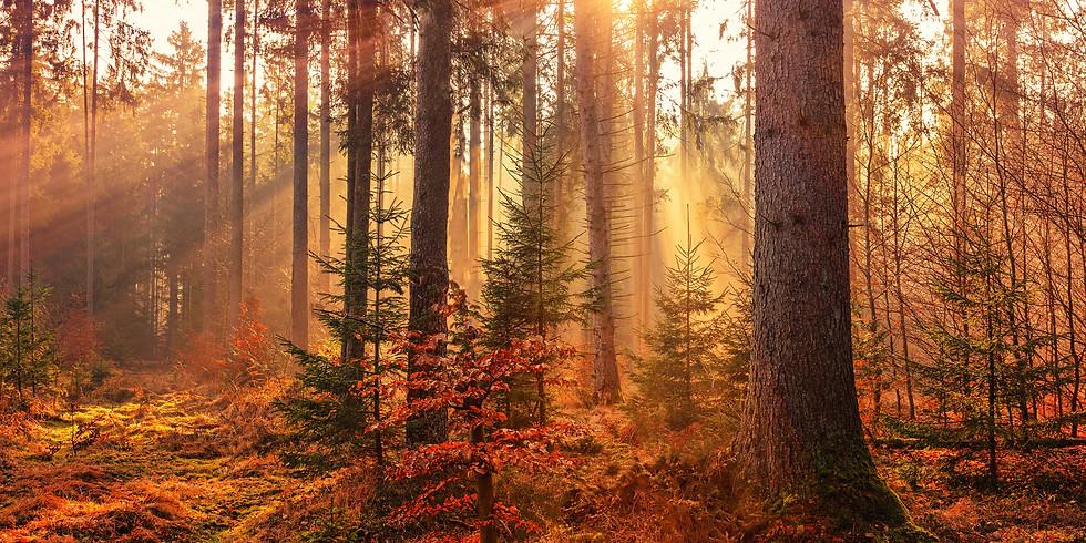 Autumn Equinox Womxn's Circle (online)