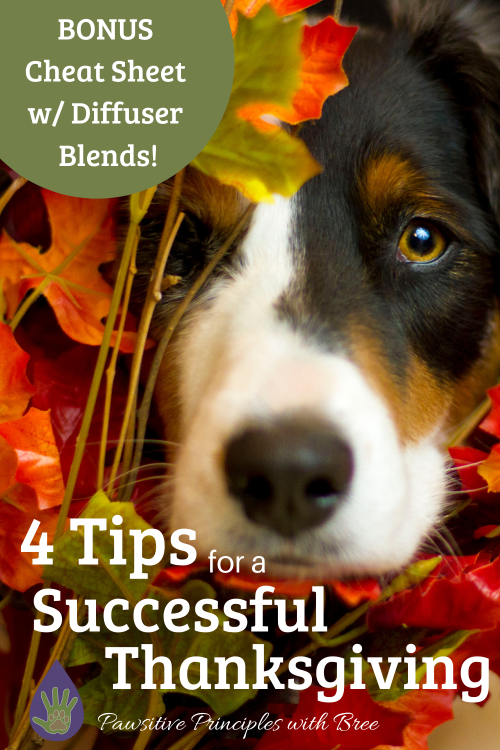 Thanksgiving Safety tips for your pup