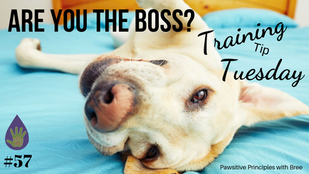 Are YOU the Boss?