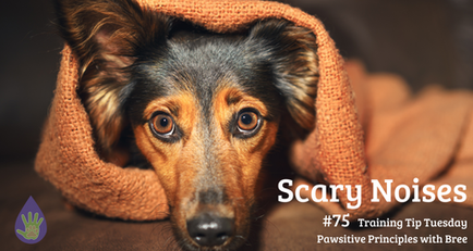 Scary Noises - Noise Desensitization for Dogs