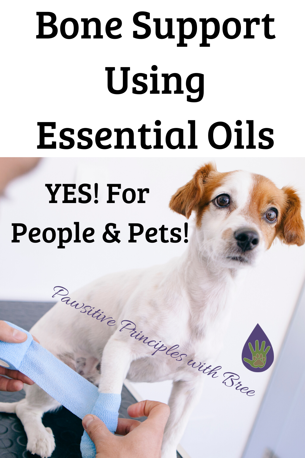 The best essential oils for bone support in dogs and humans