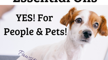 Bone Support For Dogs With Essential Oils