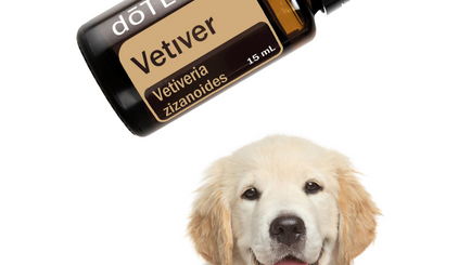 Let's Talk Vetiver - How to Use Vetiver to Support Your Dog