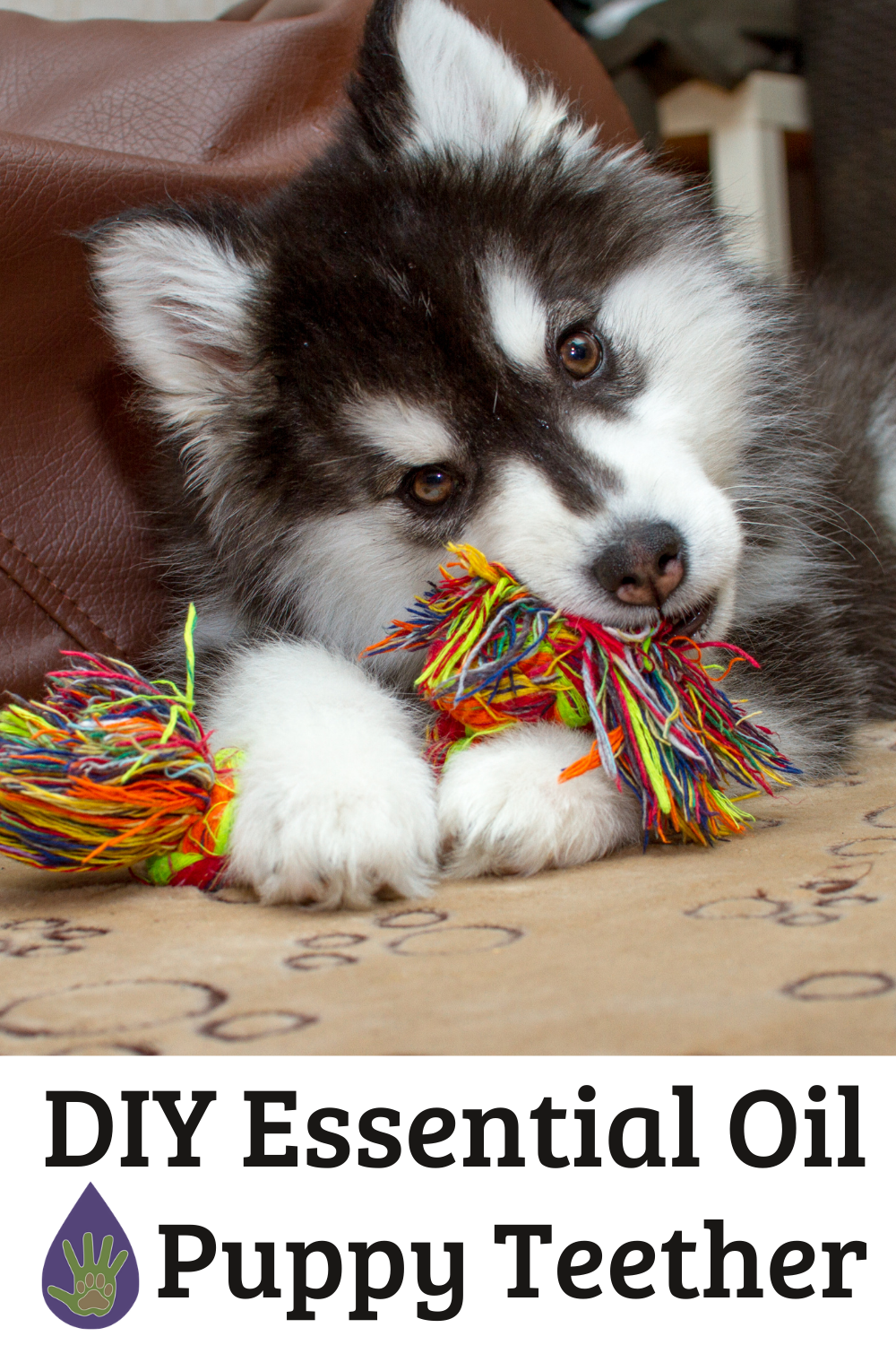 DIY Puppy Teether with Essential Oils