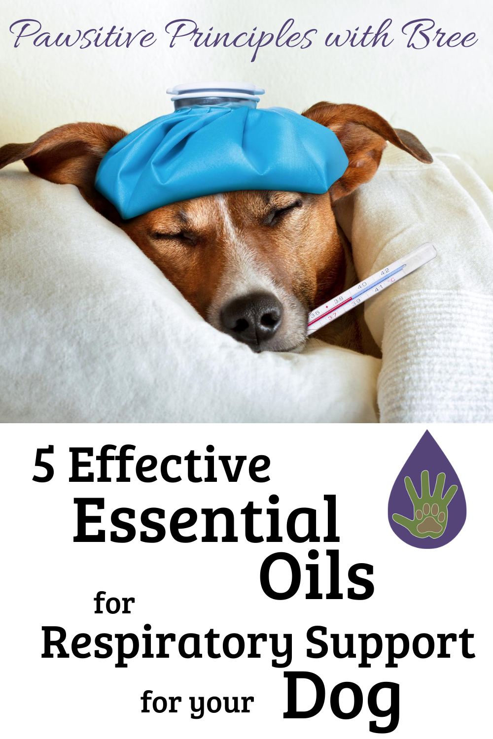 DIY Kennel Cough Support with these 5 effective essential oils for dog respiratory support