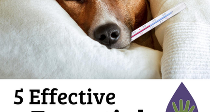 5 Effective Essential Oils for Dog Respiratory Support