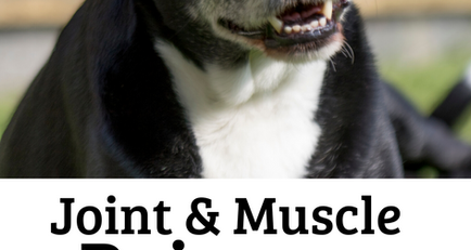 Sore Muscle and Joint Spray for Dogs