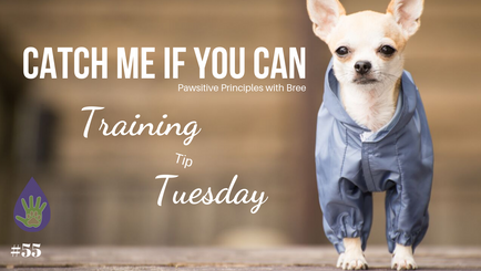Catch Me If You Can: Picking Up A Little Dog