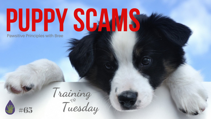Puppy Scams and How To Avoid Them