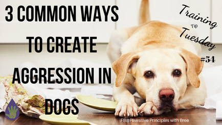 3 Common Ways To Create Aggression in Dogs
