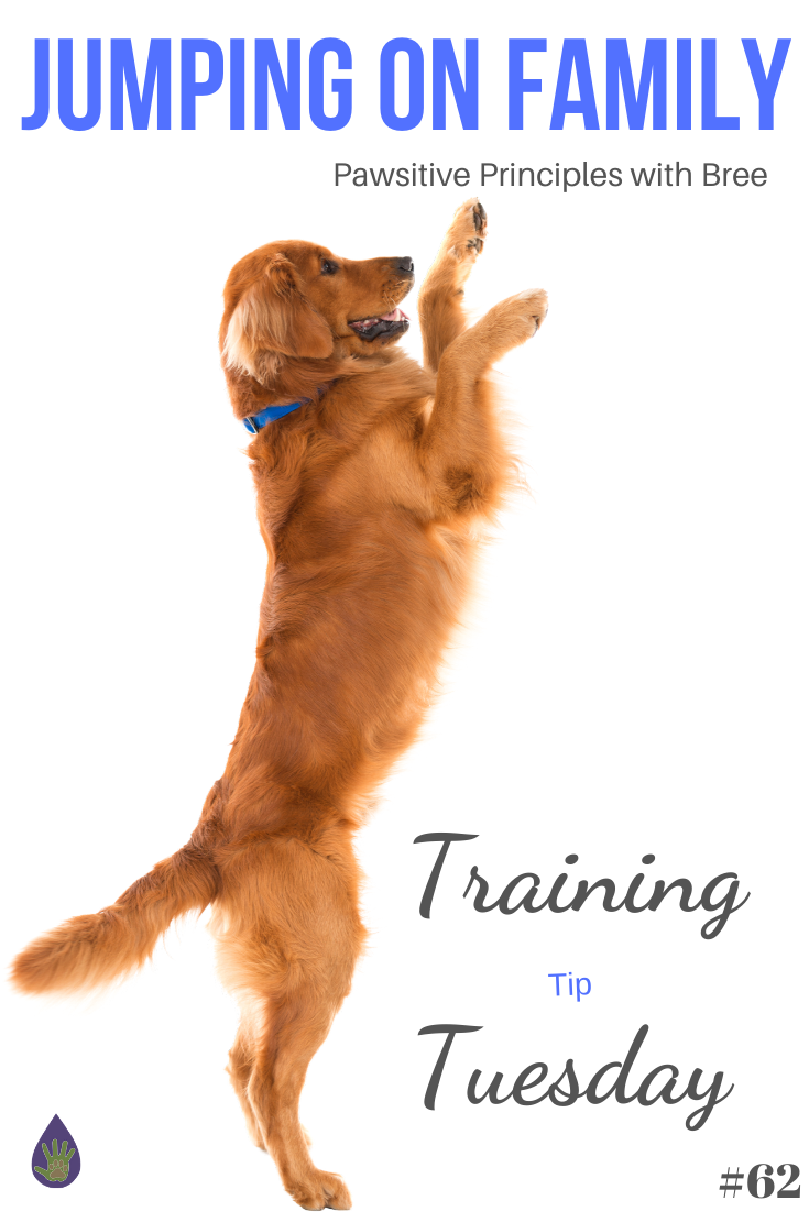 Easy tips for teaching your dog not to jump