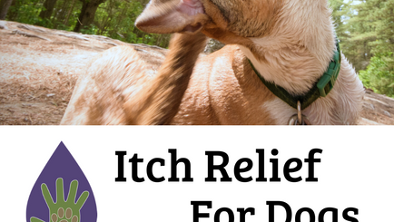 Itch Relief for Dogs Using Essential Oils