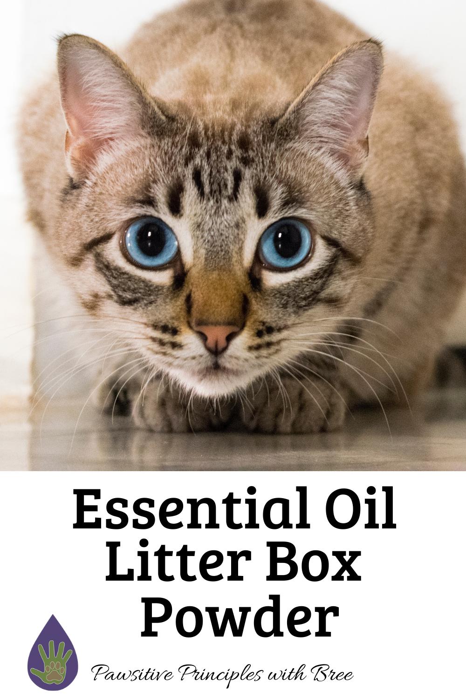 DIY Litterbox Powder