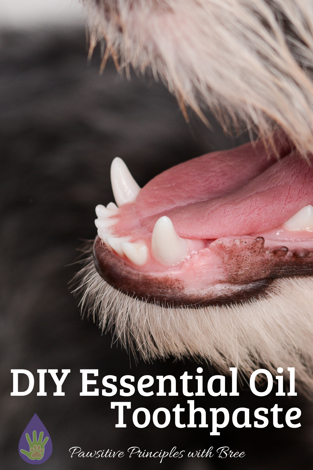 DIY Essential Oil Toothpaste for Dogs