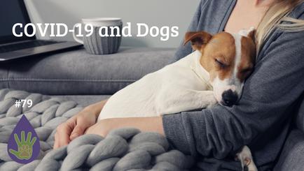 COVID 19 & Dogs