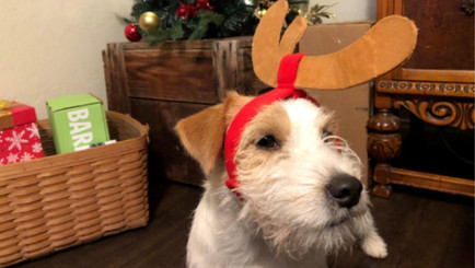 Preparing for the Holidays with Your Dog