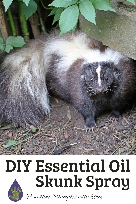 DIY Essential Oil Skunk Spray