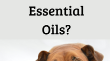 My Dog Hates Essential Oils