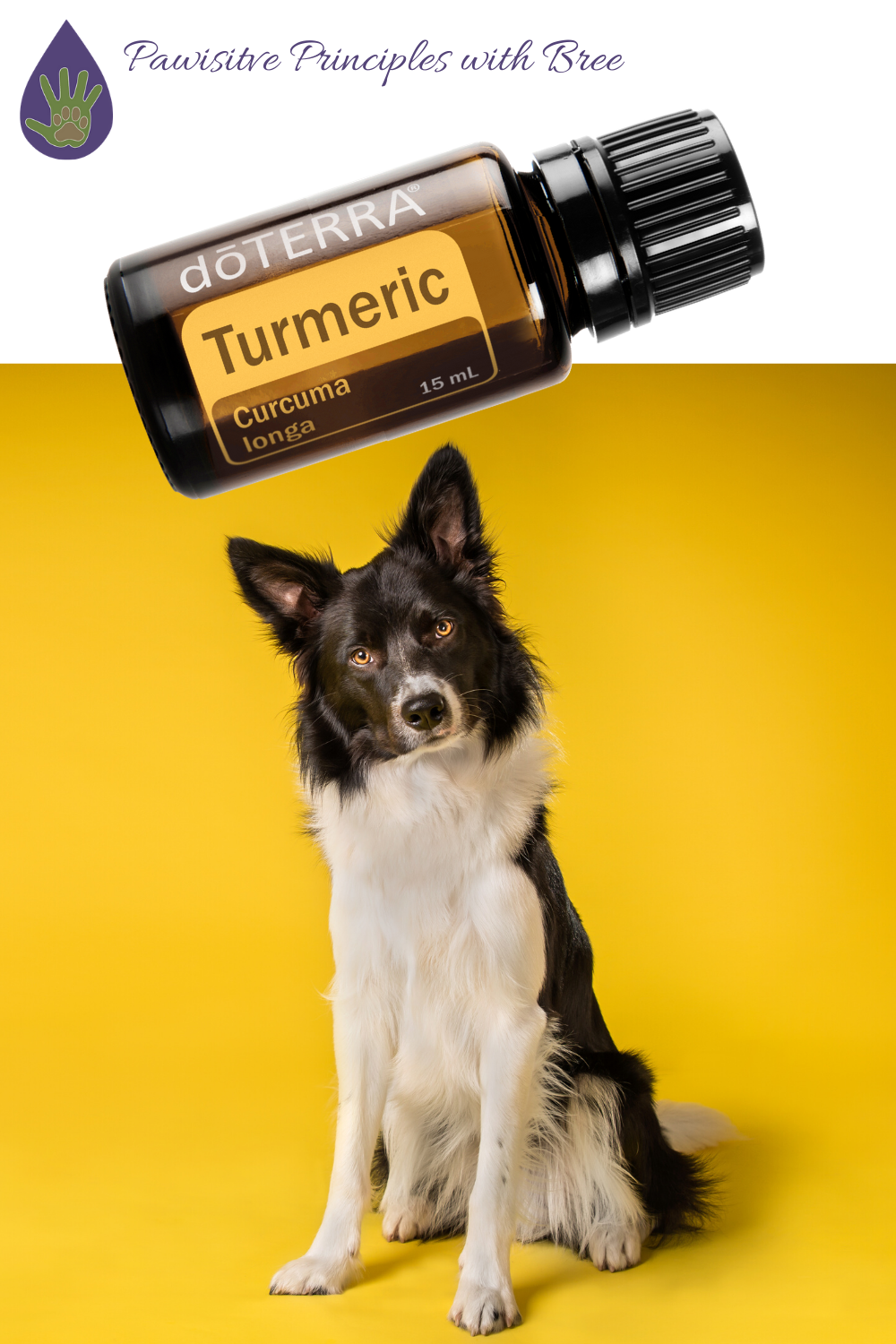 The health benefits of turmeric for dogs
