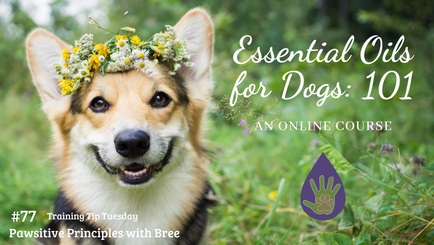 Essential Oils for Dogs:101 - Online Course