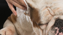 Dog Clean Ear Support with Essential Oils