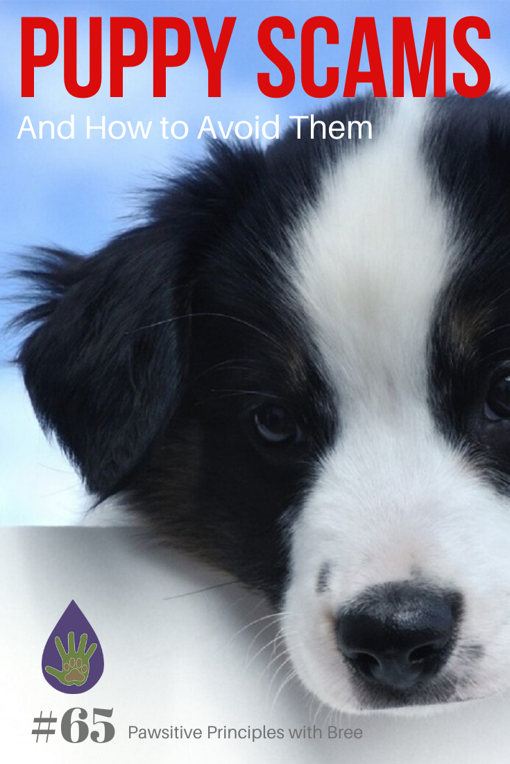 Learn the most popular puppy scams and how to avoid them.