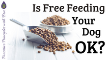 Is Free Feeding Your Dog Ok?