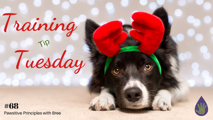 6 Tips for Holiday Success With Your Dog