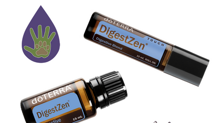 Essential Oils for Dogs: DigestZen for Tummy Troubles