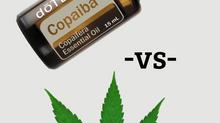 Essential Oils for Dogs: Copaiba vs CBD