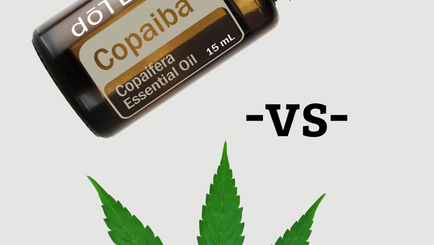 Essential Oils for Dogs: Copaiba vs CBD