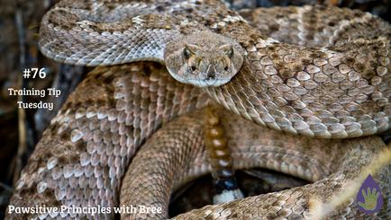 Rattlesnake Avoidance, Is It For My Dog?