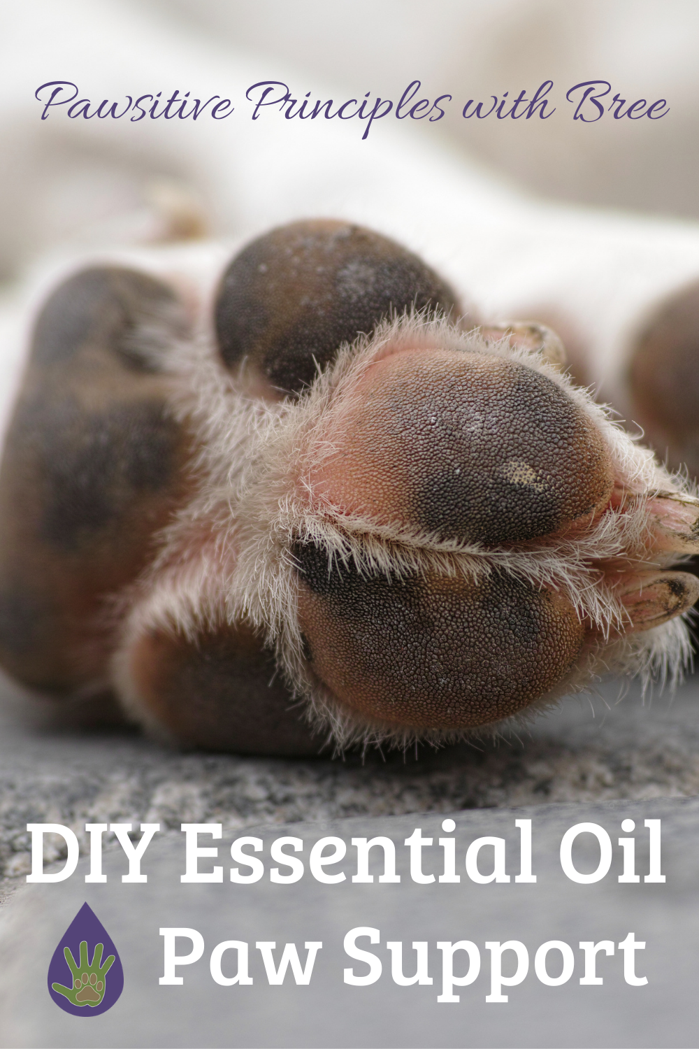 Natural Paw Pad Support with Essential Oils
