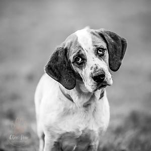 Cumbria Animal Rescue
