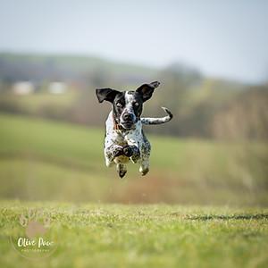 Animal Rescue Cumbria - 02