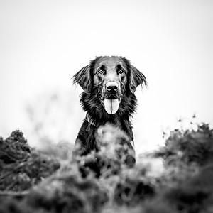 Winston - Puppy Paw shoot 3