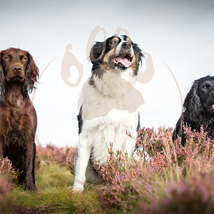 Henry, Penny and Elsie