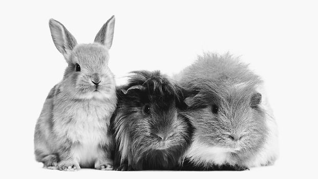 Rabbit and GP.jpg