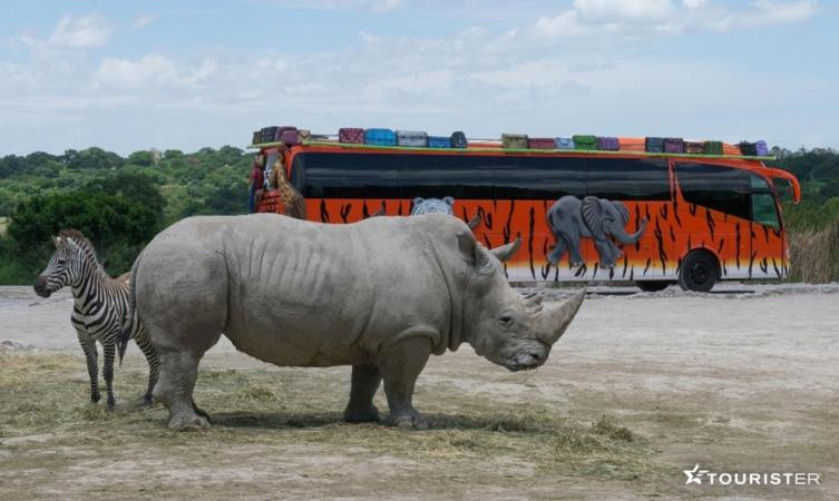 Llegaremos directamente a Africam Safari en donde tendremos un recorrido guiado.