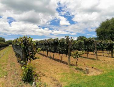 Disfruta de este lugar a lo grande y conoce todo sobre la producción del vino.