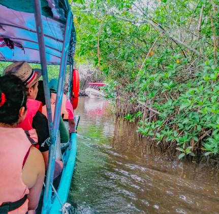 Tour por los manglares.