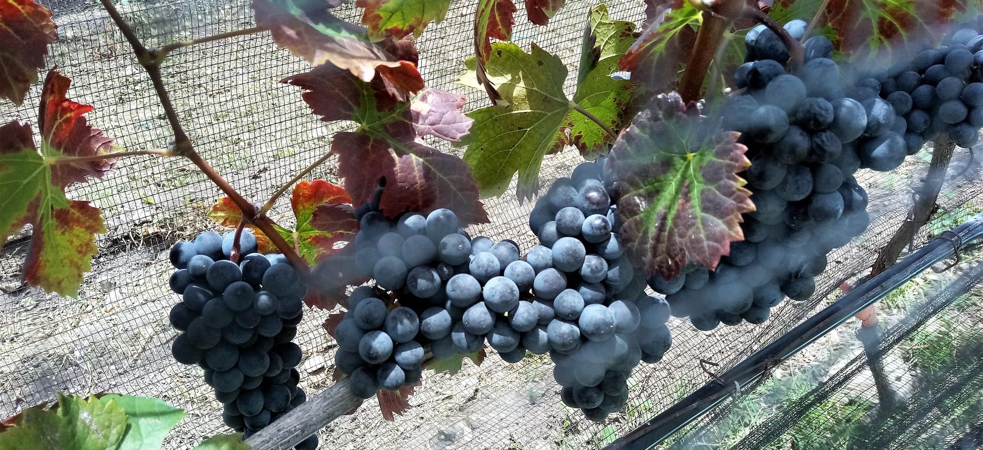 Deléitate de una rica degustación de un vino de la casa.
