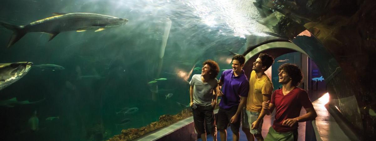 acuario-veracruz-atracciones.jpg